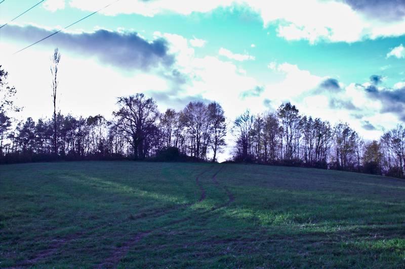 champ d'automne