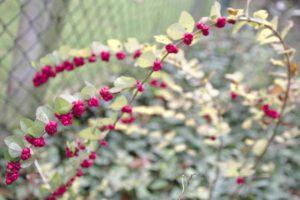 Bordeaux - Fleurs Dans Mon Jardin