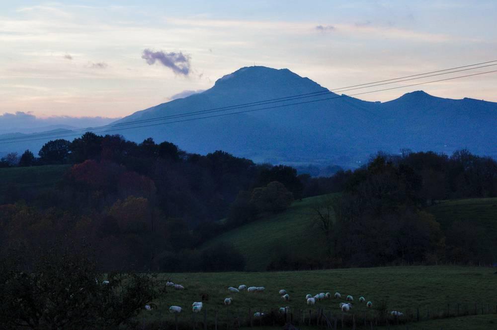 Pays Basque - Moutons Devant La Rhune