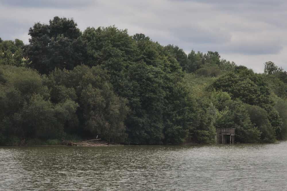 Héron Lac de la Prade