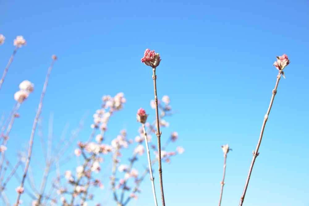 Quelques fleurs en hiver au Parc floral de Bordeaux