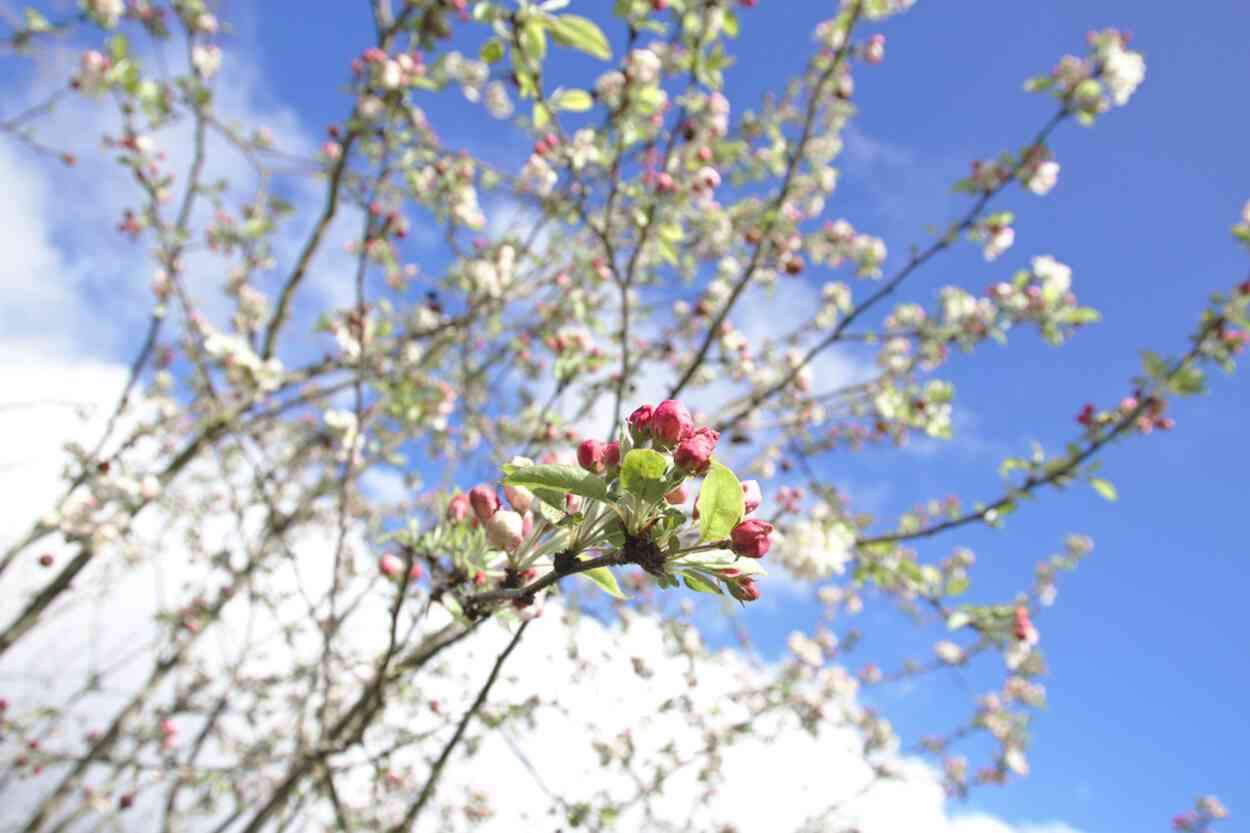 Printemps au Parc floral de Bordeaux: arbre en fleurs