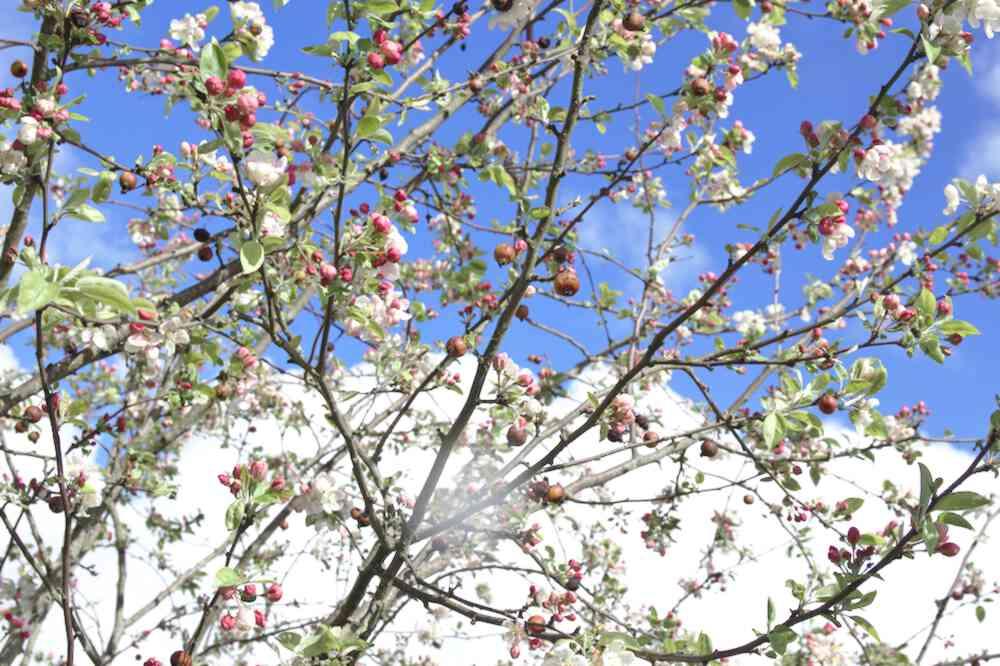 Printemps au Parc floral de Bordeaux