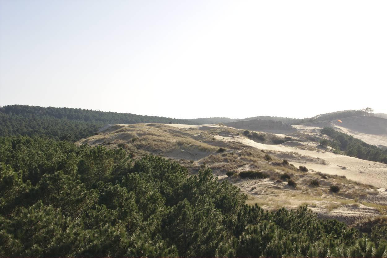 Forêt de pins de la Dune du Pilat