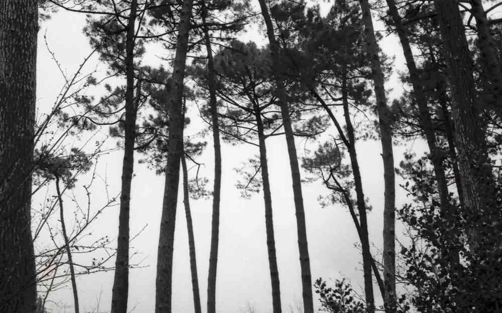 Lignes des pins