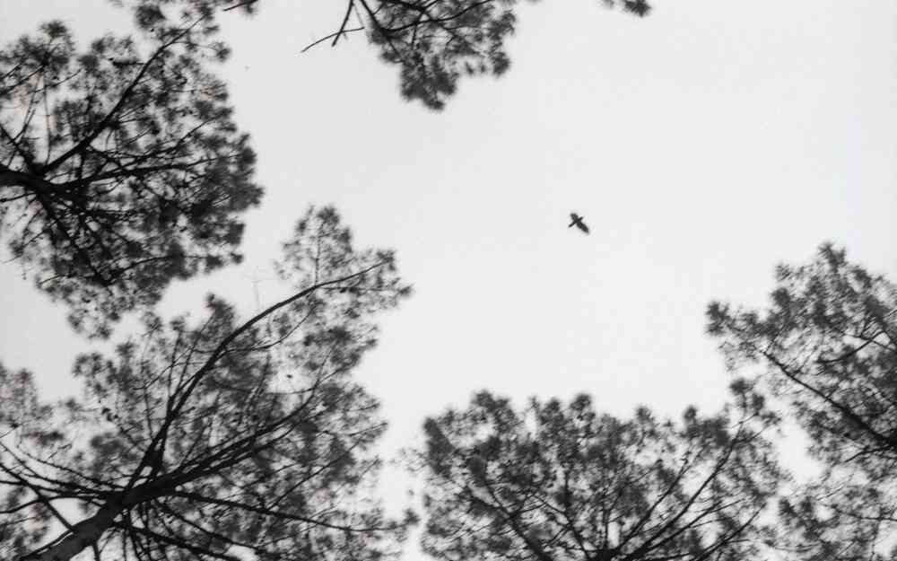 Un oiseau à travers les pins