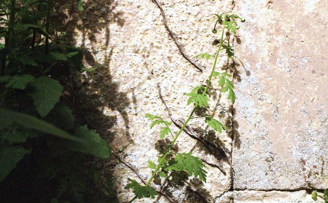 Plantes et leur jeu d'ombres sur un mur