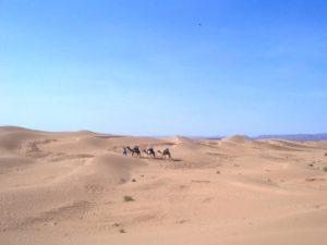 Dromadaires-dans-le-desert