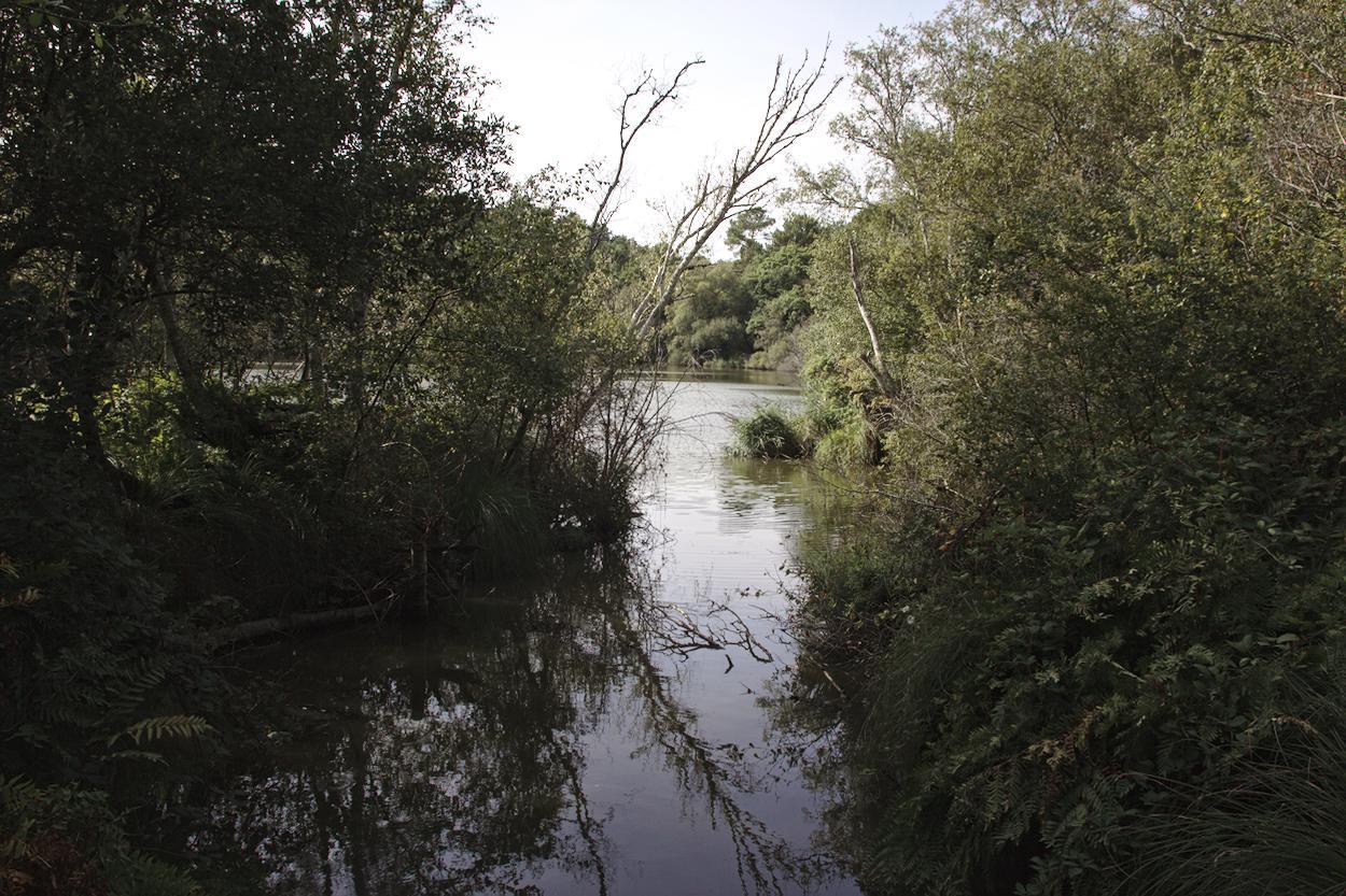Zone humide Gironde