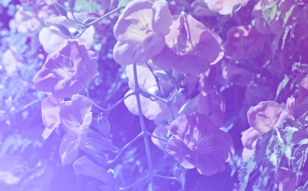 Fleurs-revolog